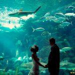 عروسی در آکواریوم